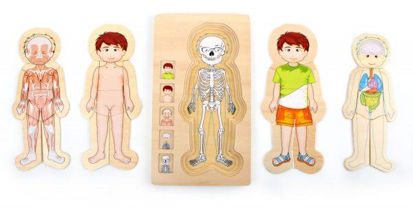 puzzle anatomía niño